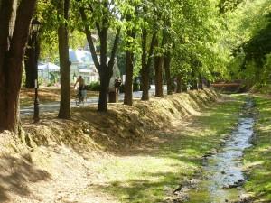 Seča suvih grana po Vrjačkom parku